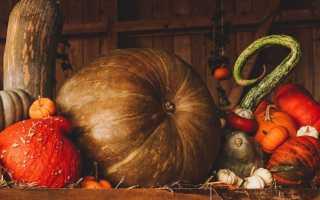 Способы хранения тыквы в домашних условиях зимой: в погребе, квартире, холодильнике, морозилке