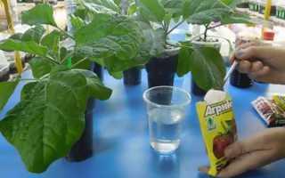 Чем можно подкормить рассаду баклажанов