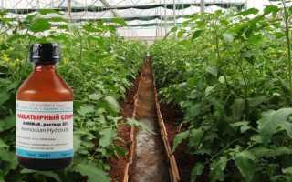 Как подкармливать томаты нашатырным спиртом: рецепты подкормок, правила полива и опрыскивания
