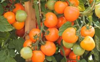 Томат Оранжевый земледелец F1: характеристика и описание, урожайность
