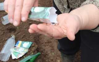 Как посадить капусту в открытый грунт семенами и рассадой: сроки, схема и правила посадки