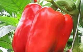 Перец Эскимо F1: характеристики и описание, отзывы, урожайность