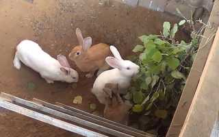 Особенности разведения кроликов в ямах: обустройство и содержание