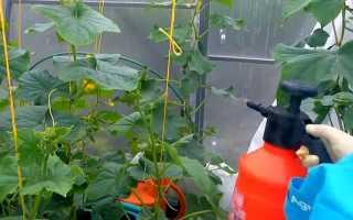 Обработка и подкормка огурцов сывороткой и йодом