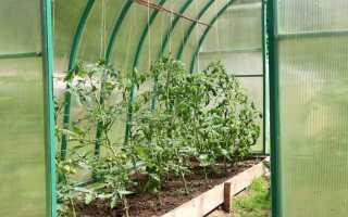 Секреты выращивания помидоров в теплице из поликарбоната