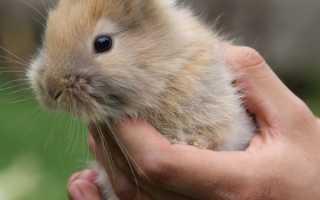 Советы по уходу за кроликом в домашних условиях
