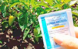 Опрыскивание перцев борной кислотой: рецепты и нормы внесения