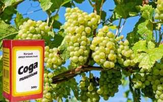 Как обрабатывать виноград пищевой содой?