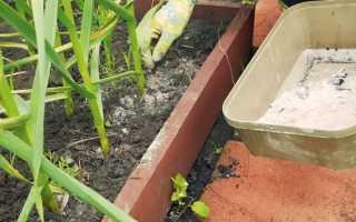 Чем лучше подкормить чеснок посаженный под зиму — схемы и нормы внесения