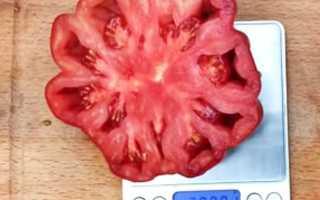 Описание сорта томата Нина: характеристика и урожайность