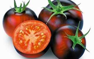 Описание томата Черника: характеристика, урожайность, целебные свойства