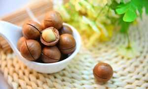 Польза и вред ореха макадамия для организма: свойства, суточная норма, калорийность