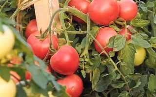 Томат Лимеренс F1: характеристика и описание, урожайность, отзывы