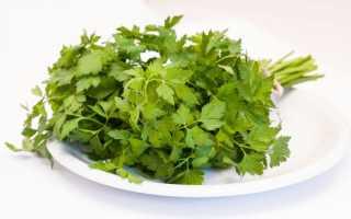 Польза и вред петрушки для здоровья: состав, целебные свойства, нормы употребления