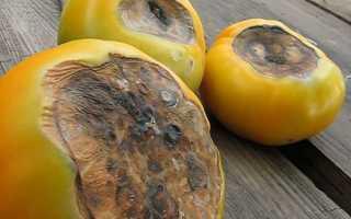 Меры борьбы с вершинной гнилью на томатах