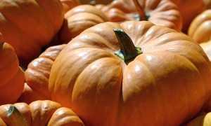Польза и вред тыквы для организма: состав и суточная норма