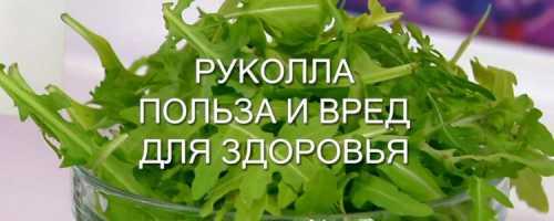 Польза и вред рукколы для здоровья: свойства, рецепты салатов, противопоказания