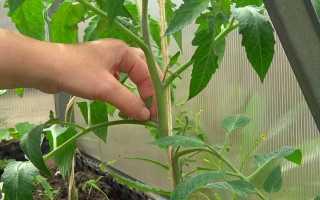 Как правильно пасынковать помидоры в условиях теплицы — пошаговая инструкция для начинающих огородников