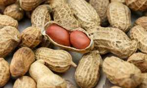 Польза и вред арахиса для организма: состав, суточная норма, калорийность