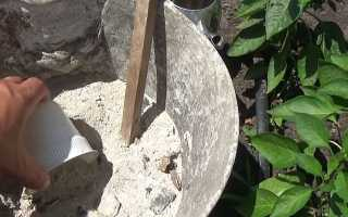 Правила подкормки перца золой: как приготовить удобрение и нормы внесения