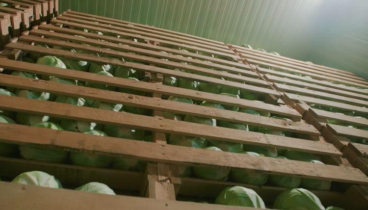 Сохранение урожая на полках